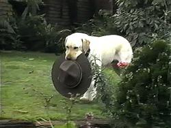 Bouncer in Neighbours Episode 1320
