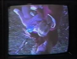 Jacinta Myers, Amy Greenwood in Neighbours Episode 2968