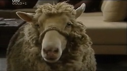 Casserole the sheep in Neighbours Episode 4678