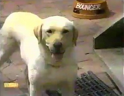 Bouncer in Neighbours Episode 0873
