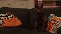 Bossy in Neighbours Episode 7283