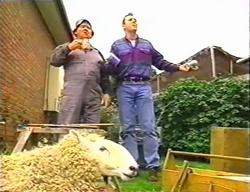 Jock Finch, Karl Kennedy, Casserole the sheep in Neighbours Episode 3441