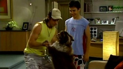Dylan Timmins, Stingray Timmins, Harvey in Neighbours Episode 4738